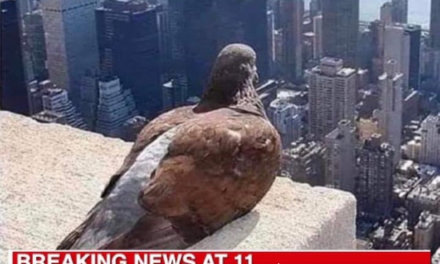 Local NYC Media Reports On Birds Wellbeing During Quarantine – Funny Meme