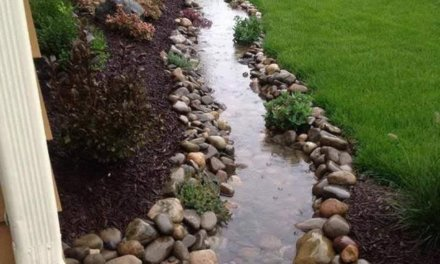 Daily Pic – Mini River In Front Yard