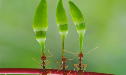 Daily Pic – Jungle Ants
