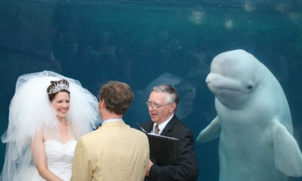 Daily Pic – Best Wedding Photo Ever