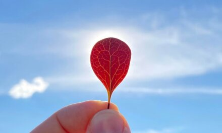 Daily Pic – Heart Shape On The Red Leaf