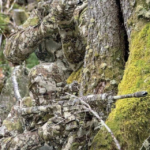 Daily Pic – Really Good Camo