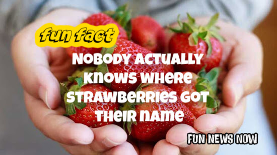 Fun Fact :  Nobody actually knows where strawberries got there name